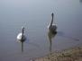 Dorogi tó búvártúra